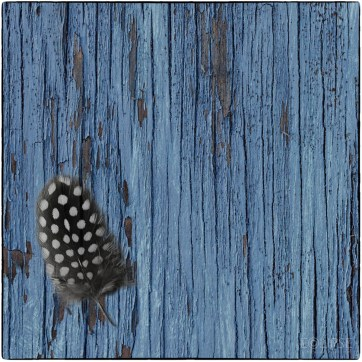 Panel of three, Guinea Fowl Feather, blue peeling painted wood, Guinea Fowl Feather on blue wood, Guinea Fowl Feather theme, Feather themed picture, product photography, still life photography, Creative photography
