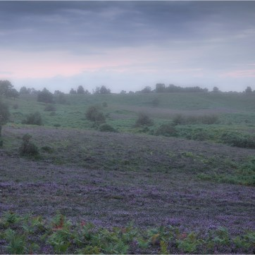 The New Forest, New Forest, New Forest Heather, Heather in the mist, Landscape, Landscape photography