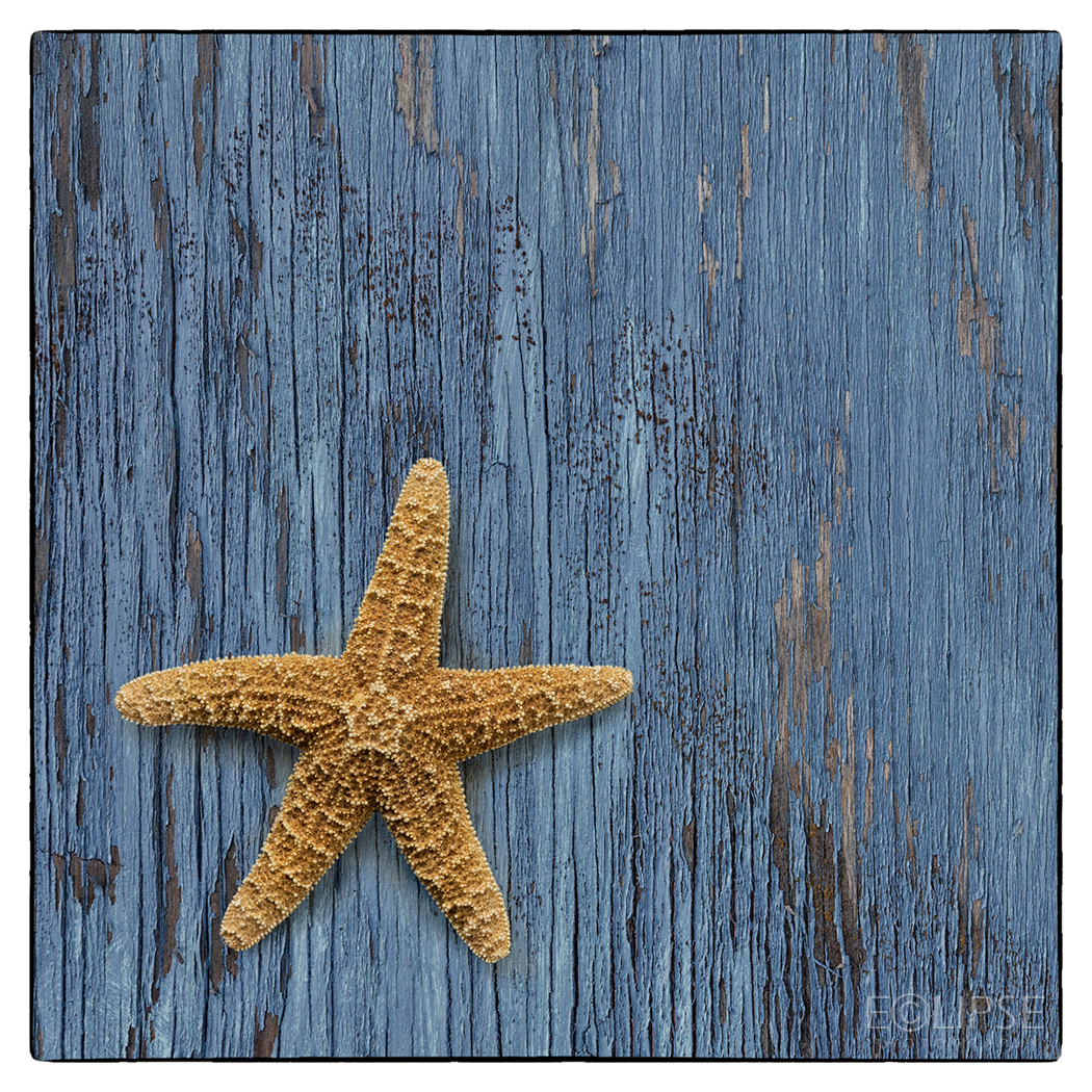 Panel of three, starfish, blue peeling painted wood, starfish on blue wood, sea theme, sea themed picture, product photography, still life photography, Creative photography