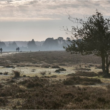 Dog walkers, Denny Wood, The New Forest, New Forest, Early morning walk, misty morning, lone tree, light forest frost