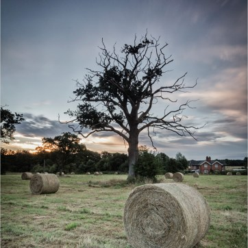 Hay bales, lone tree, early morning, shortly after sun rise, Landscape, landscape photography, The house overlooking the hay bales