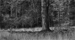New Forest trees, New Forest, The New Forest, New Forest photography, Landscape, Black and white trees, Tree bark