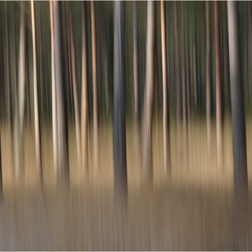 New Forest trees, New Forest, The New Forest, New Forest photography, Landscape, Blurred trees, Long exposure