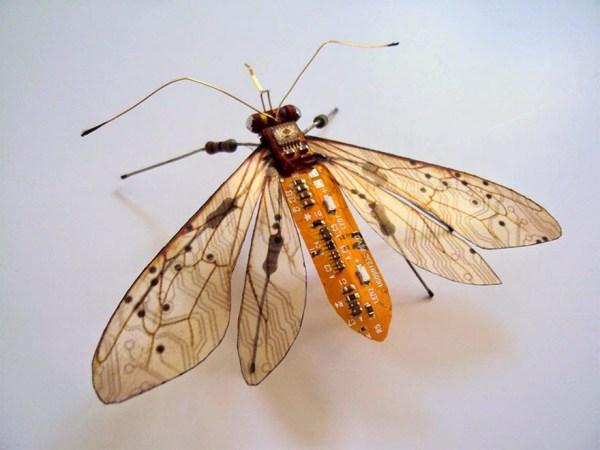 insectos 1