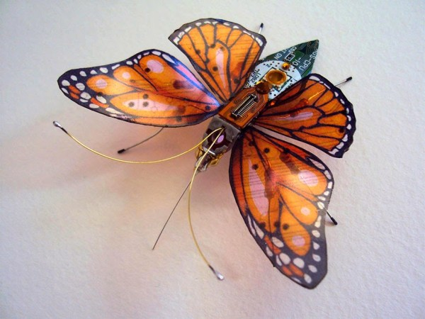 insectos 5