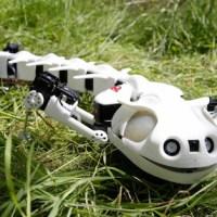 Pleurobot, el robot que emula una salamandra