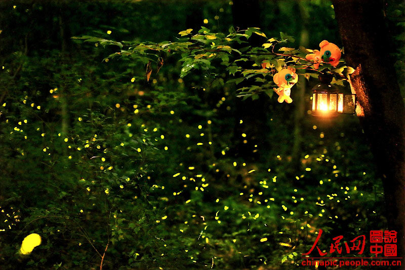 3d Fireflies Live Wallpaper Come And See Fireflies In Nanjing This Summer 5 5