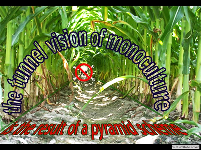 The Danger of a Monoculture