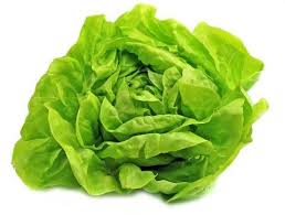 Organic Lettuce - Green - Butterhead - 2 or more 1