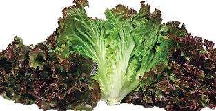 Organic Lettuce - Fancy Red 1