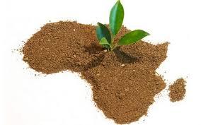 afrique développement durable
