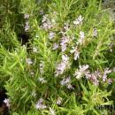 manual remedios plantas medicinales 130x130