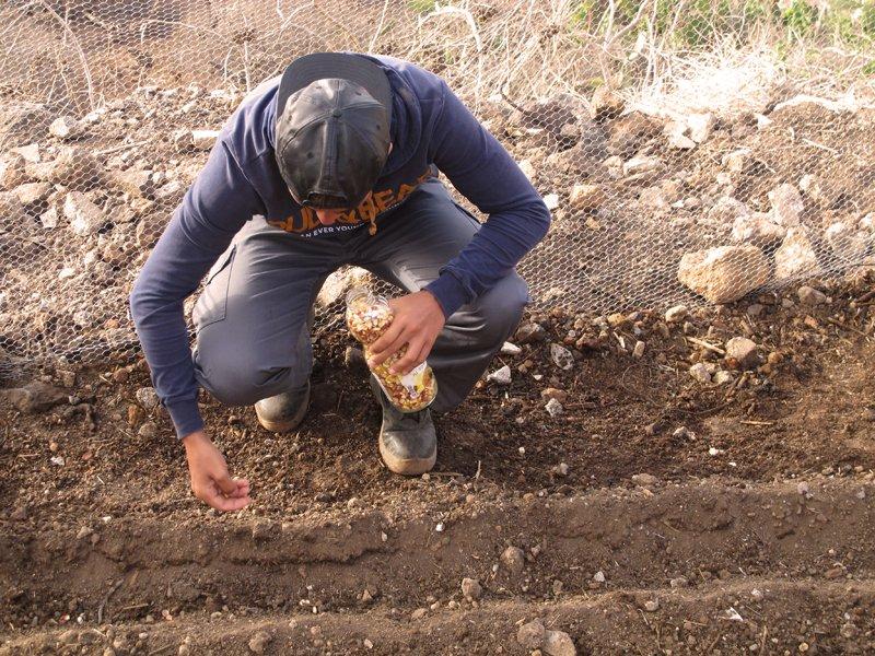 marco-plantando