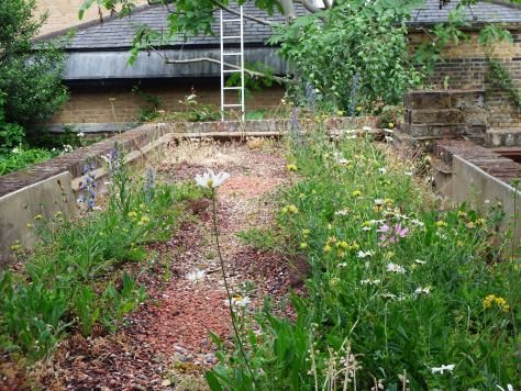 Retrofitted green roof in Kennington
