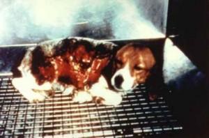vivisection-beagle