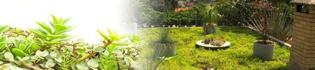 telhado-verde-sustentavel-ecocasa