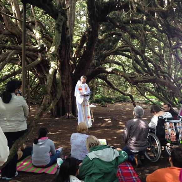 mass under the tree homily