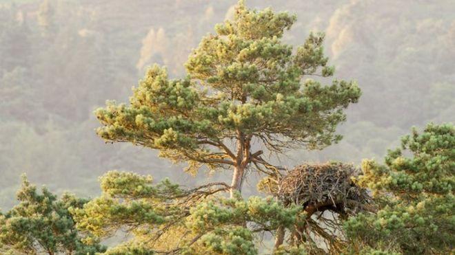 ladys-tree