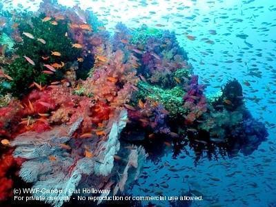 recifes de coral. WWF