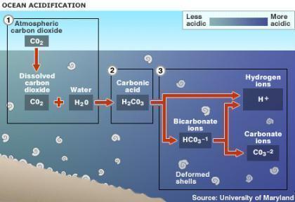 Acidificação dos oceanos.