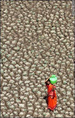 Sem uma reforma hídrica a Ásia enfrentará falta de alimentos até 2050