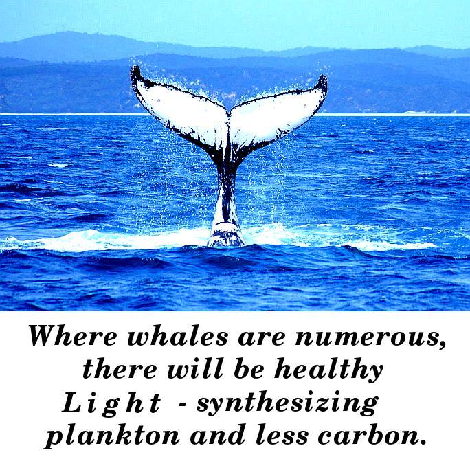 whale o2 pump