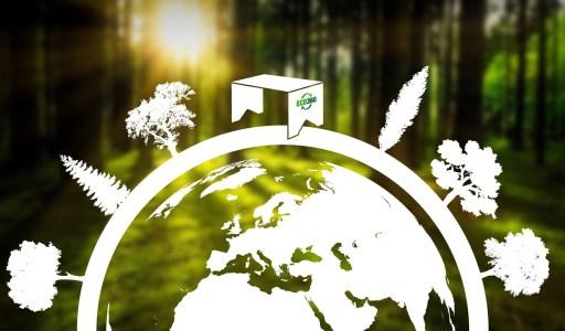 carbon-zero-eco-360-graphic-desk-trees-cardboard-recycle-circular-economy-01