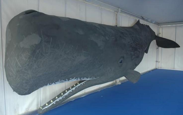 modello di balena