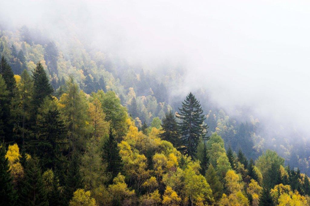Suominen o, danell k, bergström r. Ecoforestry Foundation Ekosystembaserat Skogsbruk