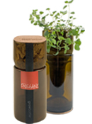 Eco Friendly Christmas Gifts GrowBottles