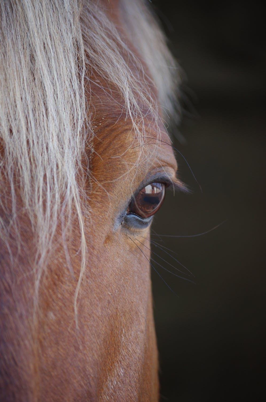 eco-friendly horse barn
