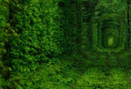 Tree Tunnel Ukraine