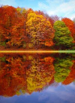 autumn fall raking leaves
