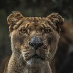 protect species to avoid 6th mass extinction