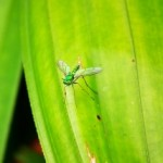eco friendly mosquito repellent to stop mosquito bites