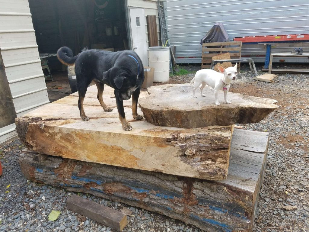 Lumber yard dogs and slabs