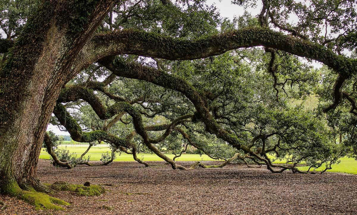 Cenizas transformadas en árbol