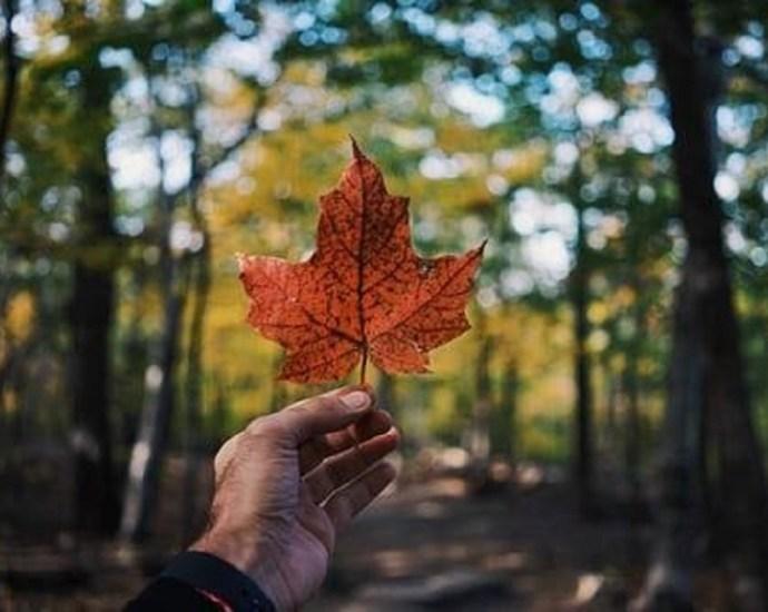 Canadian perpetual