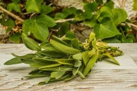 Salvia Ecológica de El Madroñal
