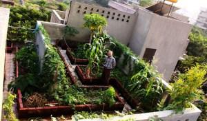 Rooftop-Garden_India