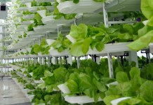 vertical-farming-3
