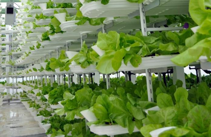 vertical-farming-3
