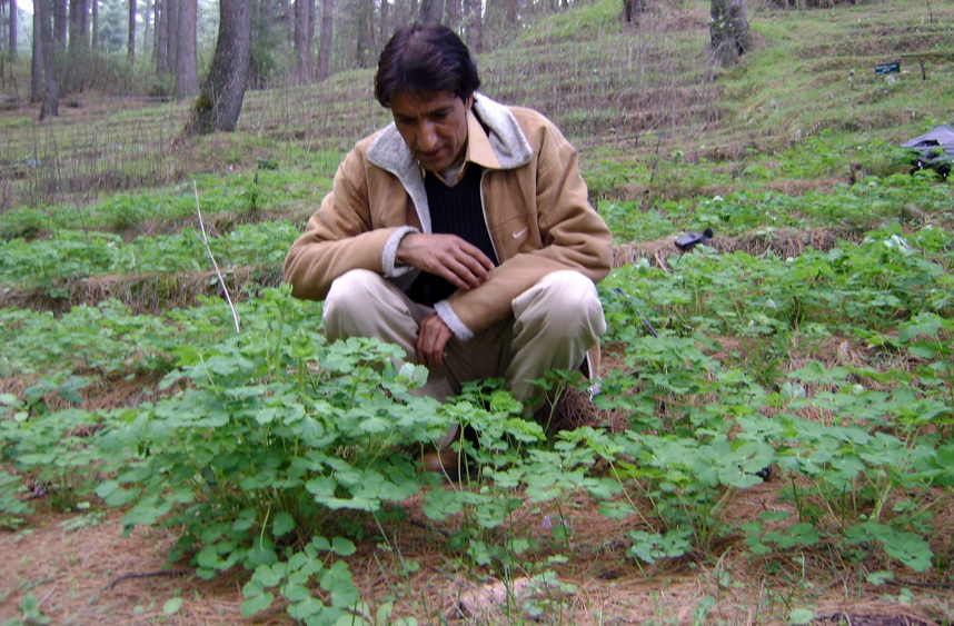 jkmpic-jk-medicinal-plants-introduction-centre
