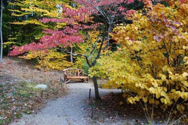 native plants landscape design