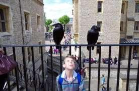 Les fameux corbeaux de la Tour