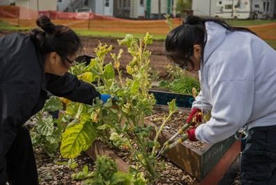 Volunteers prune garden