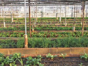 Advocate for Urban Agriculture Policies​