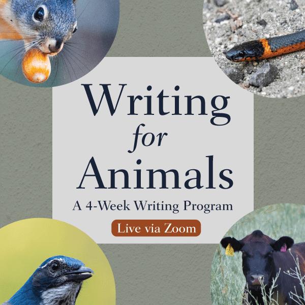 Writing for Animals: 4-week writing program. Live via Zoom.
