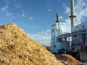 Vantaggi e svantaggi delle biomasse cologismo