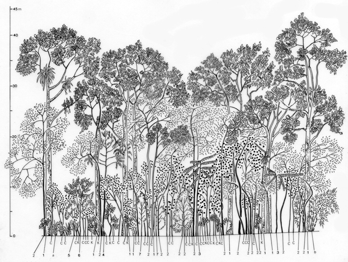 diagram of a tropical forest air brake tractor trailer ecology and society: domestic forests: new paradigm for integrating local communities ...